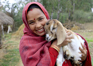 One of the goats provided by Heifer International to this farmer in Nepal