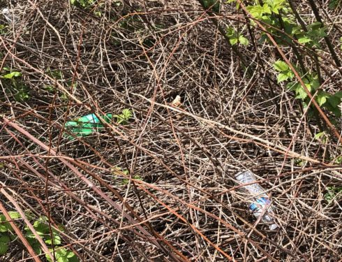 Impacting the Environment – Do AHS Student Need To Do More?